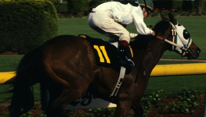 Racehorses are selectively bred for traits that increase their ability to run fast.
