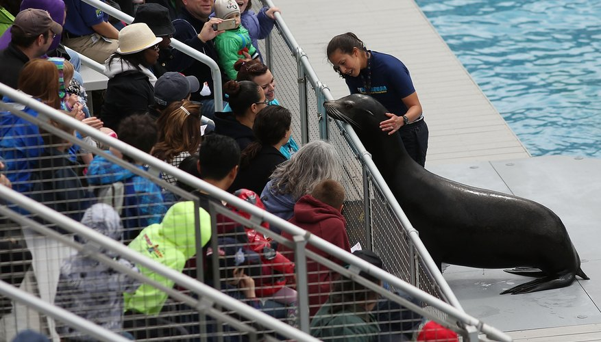 The sea lion show at the New York Aquarium.