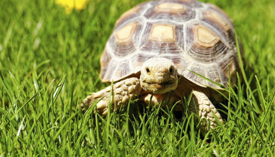 Turtle on grass.