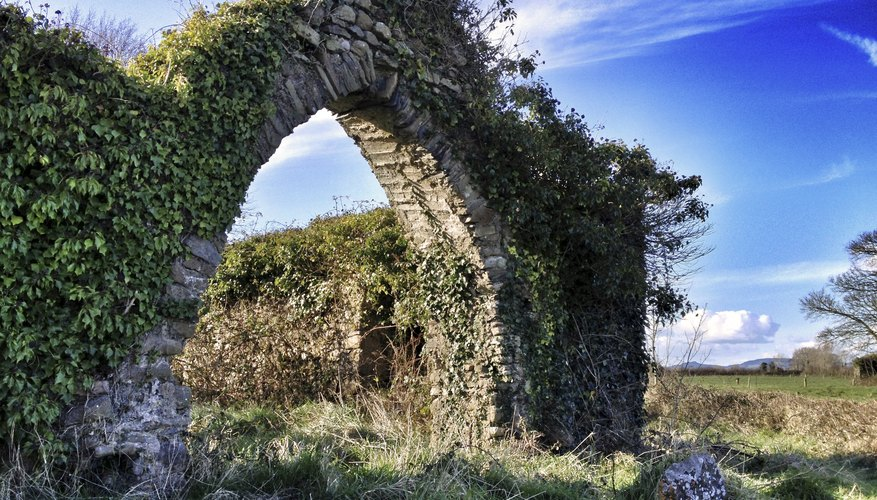 An ancient church wall covered in Irish ivy