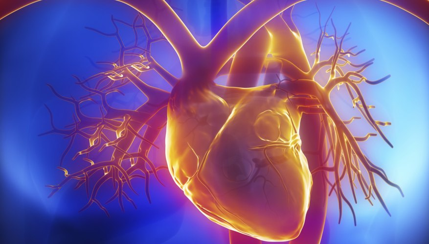 3D Illustration of the human heart.