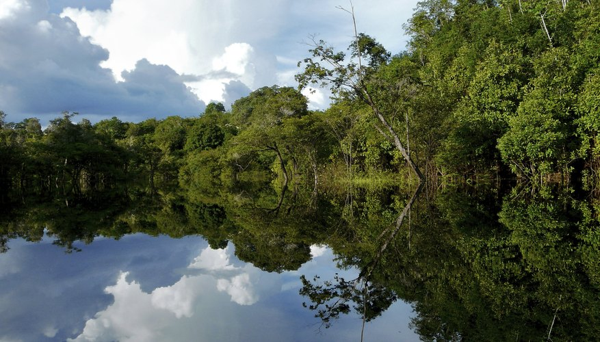 Reflective Amazon river in Brazil