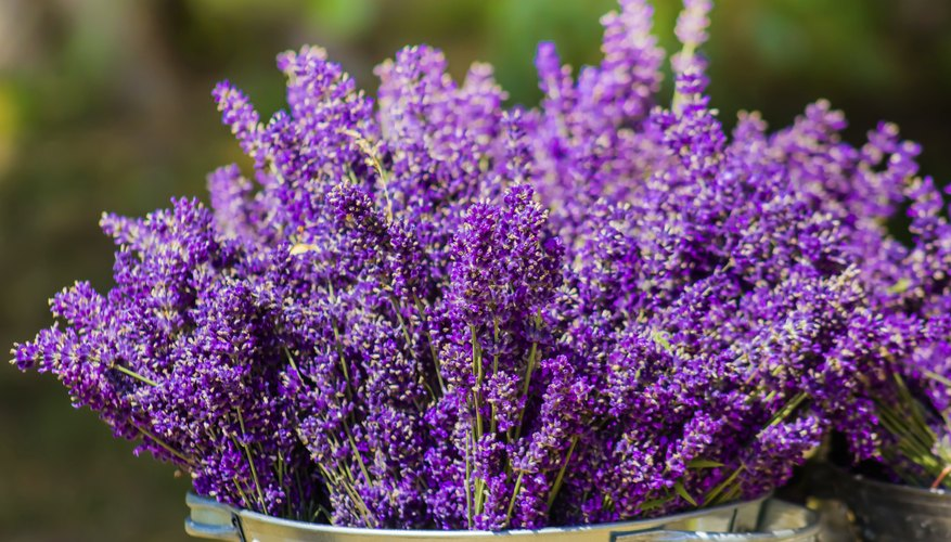 If you put lavender in water, it won't dry well.