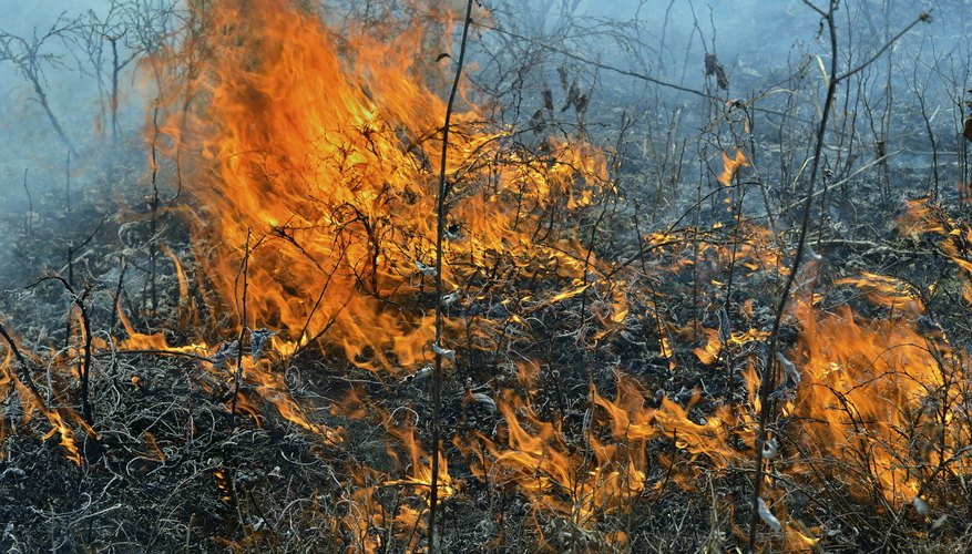 In dry weather, the wind can quickly whip a small brush fire into a larger one.