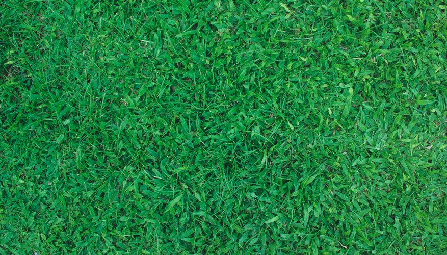 Grass from a lawn