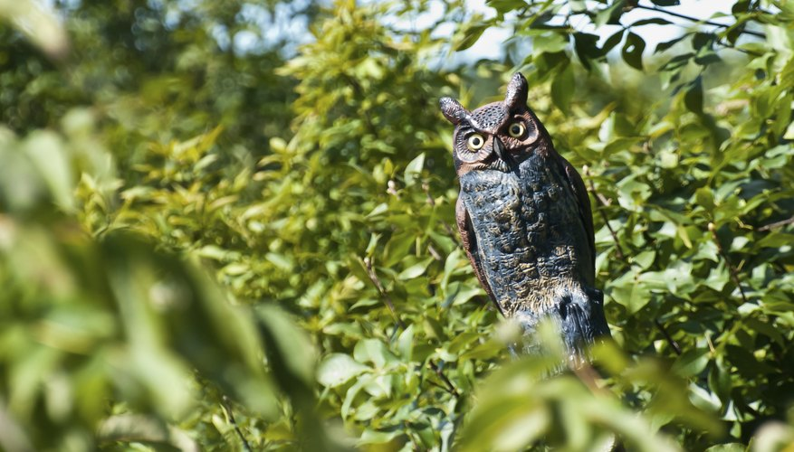 Fake owls deter birds for a limited time.