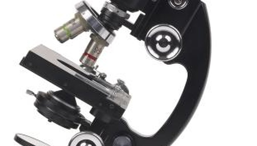 A microscope provides a magnified view of very small objects.