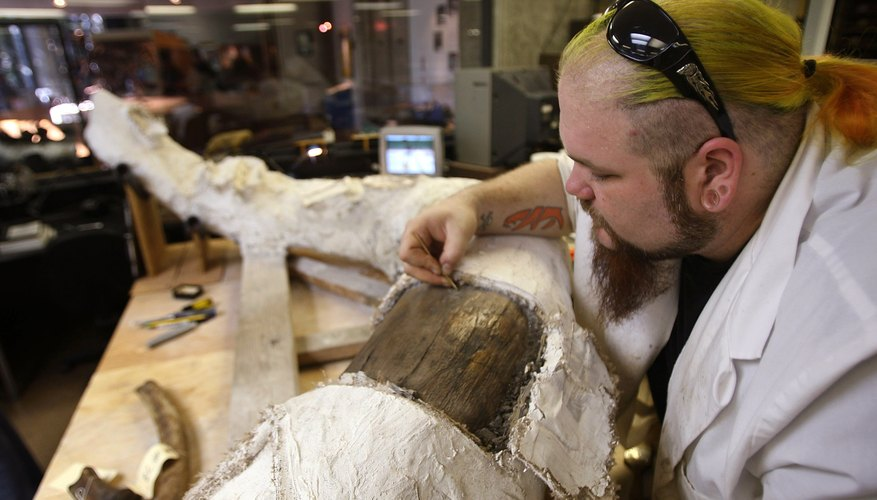 A museum employee removes a plaster cast from an elephant tusk.