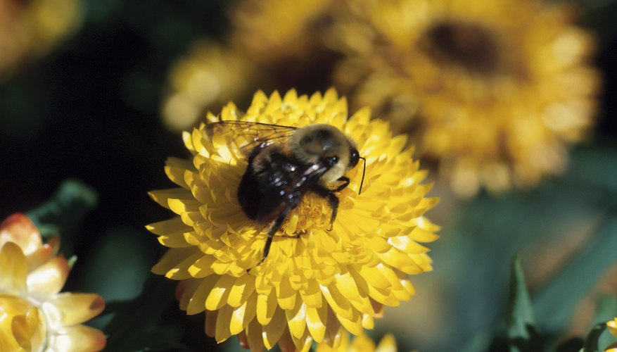 Bees are sensitive to the nectar of some plants.