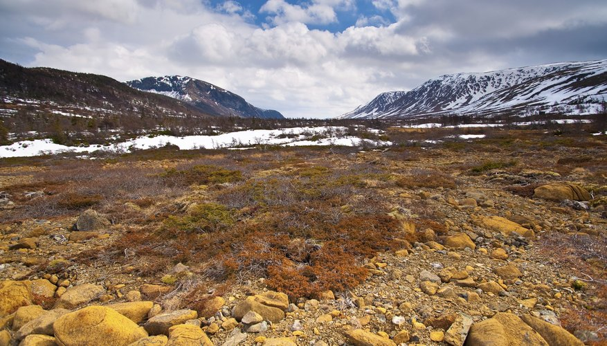 Shrubs and mosses grow on the ground of the arctic tundra.
