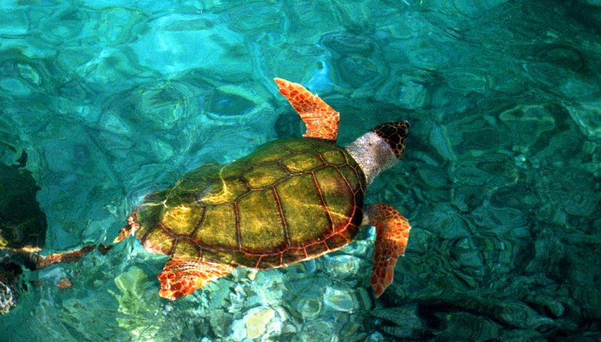 How Do Turtles Sleep