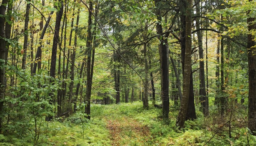 In many areas, a forest is the climax community.