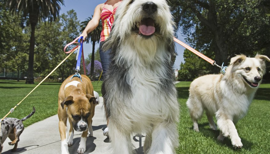 Professional pet sitters can claim leashes and plastic bags as tax-deductible expenses.
