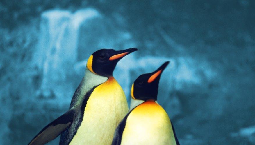 Disfruta de una visita al acuario, en Kentucky, donde puedes encontrar pingüinos que caminan como patos alrededor.