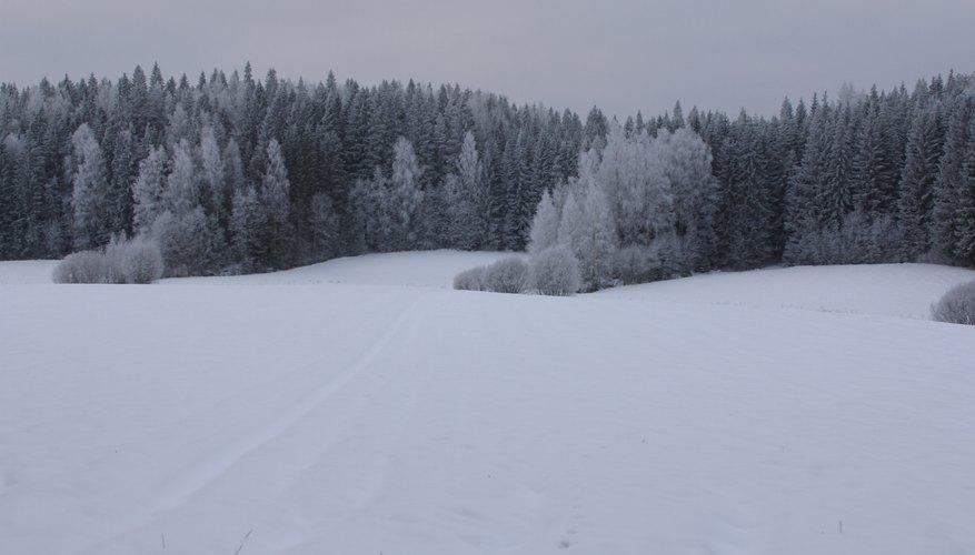 Los bosques de taiga son muy comunes a lo largo de Rusia, Canadá y algunas partes de Europa.