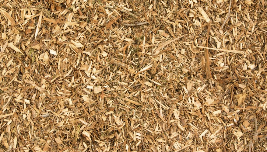 Wood chips are an example of an organic mulch.