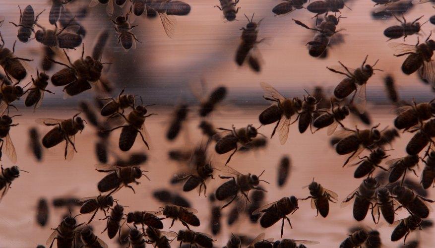 Los insectos son mayoría en el ecosistema terrestre.