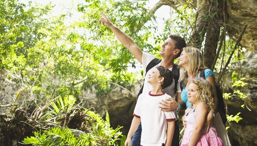 Los árboles de mango pueden crecer mas de 100 metros de altura