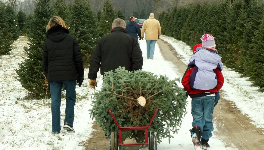 christmas tree cutting familyjpg - How To Start A Christmas Tree Farm