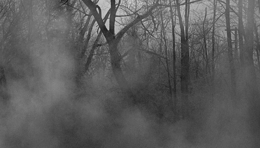 Fog can help make the forest appear spooky for visitors.