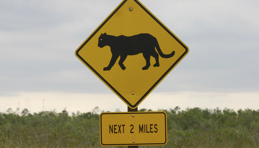 A close-up of a mountain lion crossing road sign.