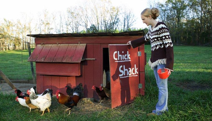 easy chicken coop plans sciencing