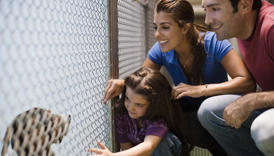 Some animal rescue groups are limited to dogs and cats.