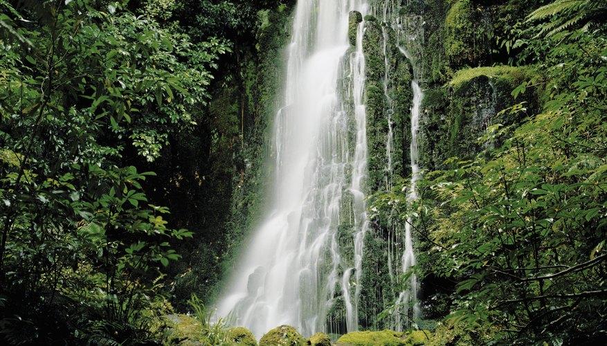 Cascada en un ecosistema selvático.