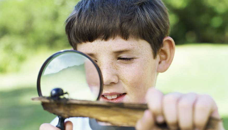 A boy using a magnifying glass to look at an insect on a piece of wood.