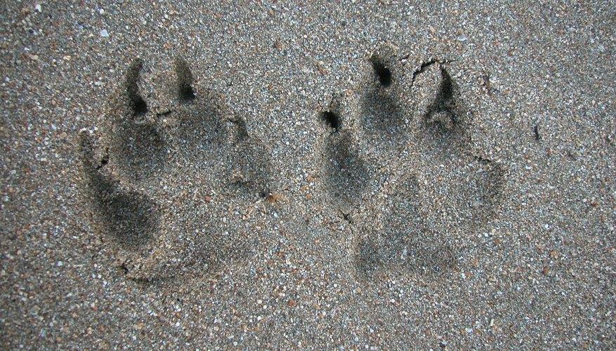 Coloca huellas de monstruos en el piso, indicando el camino a la fiesta.