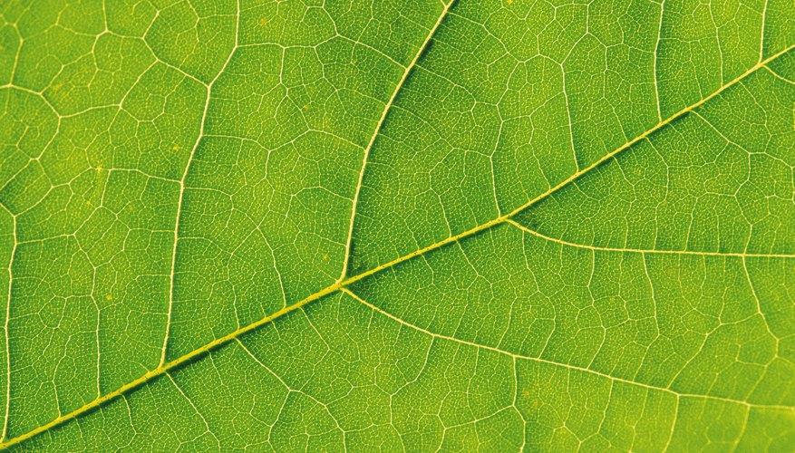 Las plantas convierten la luz solar en energía a través de la fotosíntesis.