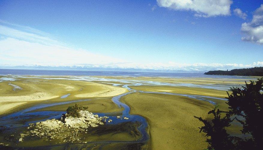 Los deltas de los ríos son pequeños arroyos que se ramifican en la boca de un río hacia un mar, lago u oceáno.