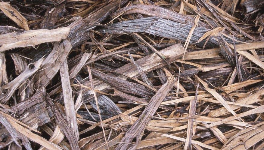 Un lecho para los halcones incluye gravilla, arena, virutas de madera y paja.