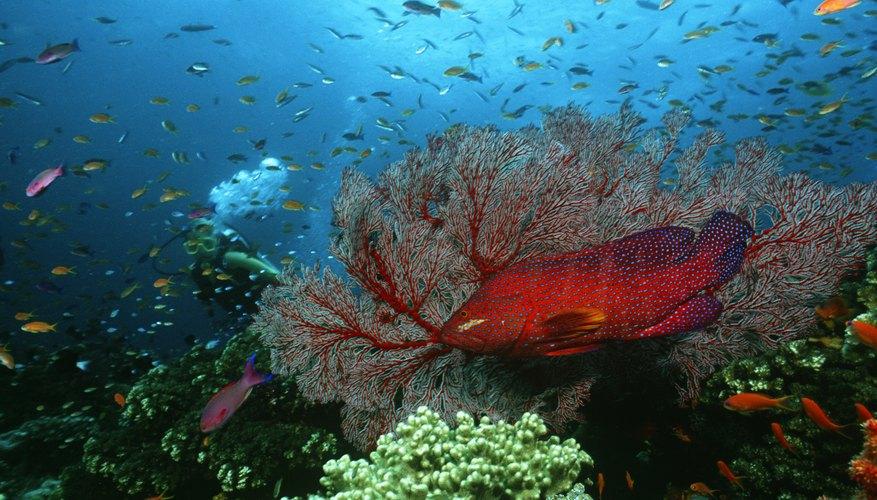 Banco de peces en un gran arrecife coralino.