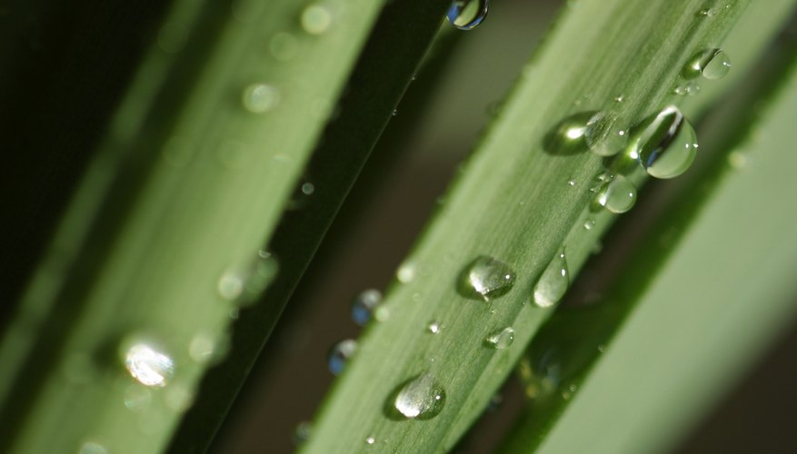 Water condenses out of the air when the temperature reaches the dew point.