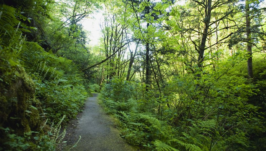 Hiking is just one of the many outdoor activities available in Gastonia.