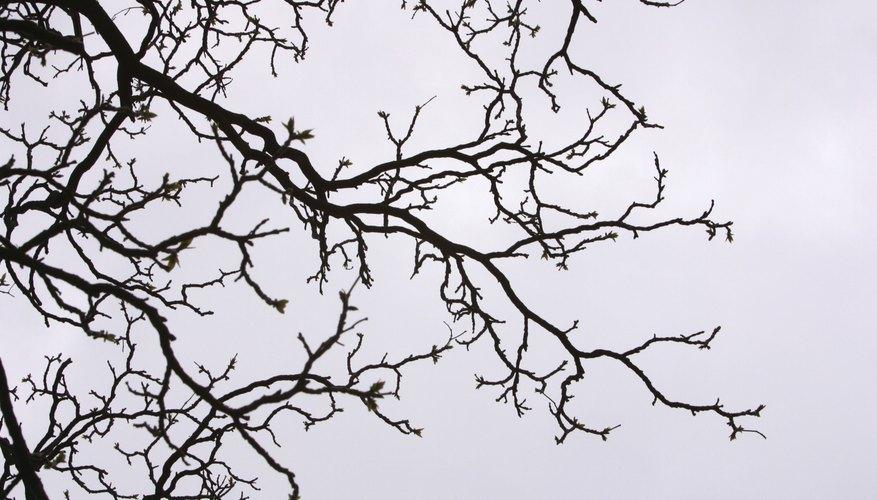 Transforma una rama de árbol en un elemento decorativo con pintura en aerosol.