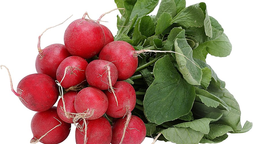 Be careful not to disturb the roots when transplanting radishes.