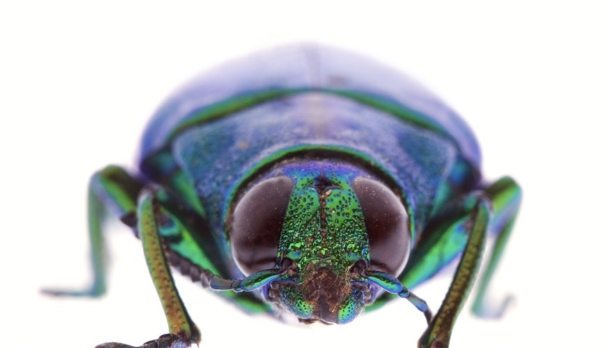 A beetle is symmetrical through the center line of its body.