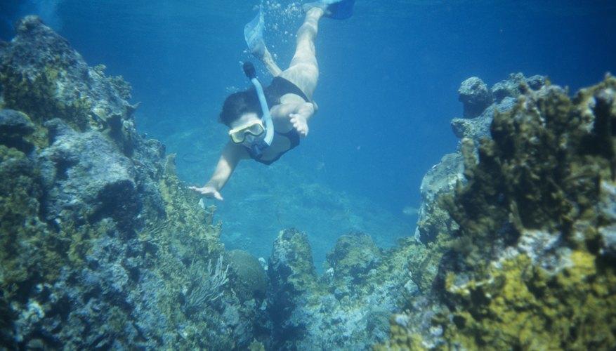 Snorkeling in Fort Meyers