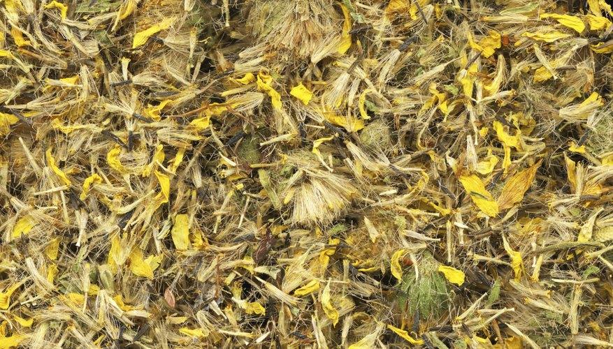 Las flores de árnica ca se consiguen en las tiendas de hierbas y de proveedores en línea.