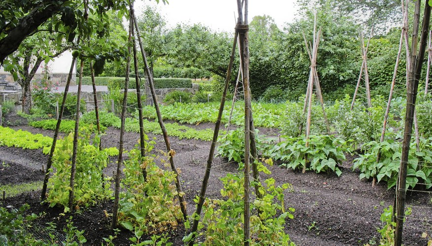 A nicely kept vegetable garden with mulch.