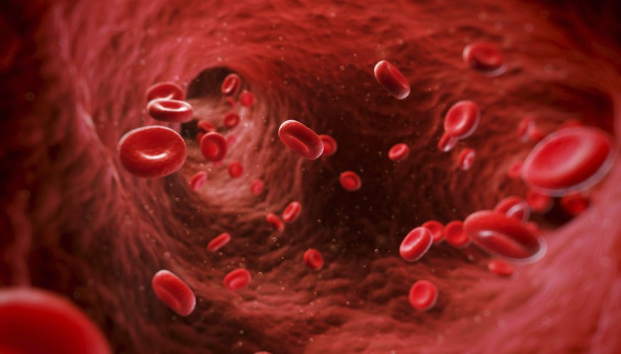 Digital depiction of blood vessel in circulatory system