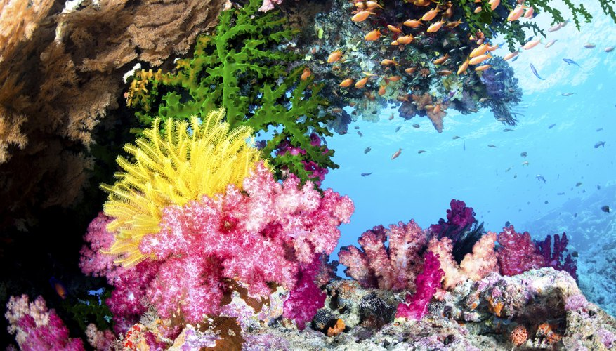 Coral reefs host a wide range of plants and animals.