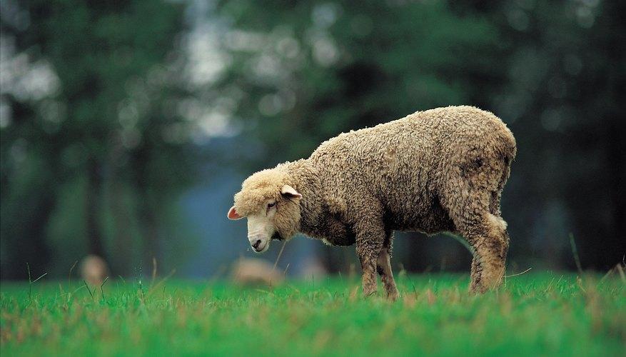 Sin ovejas no habría lana.