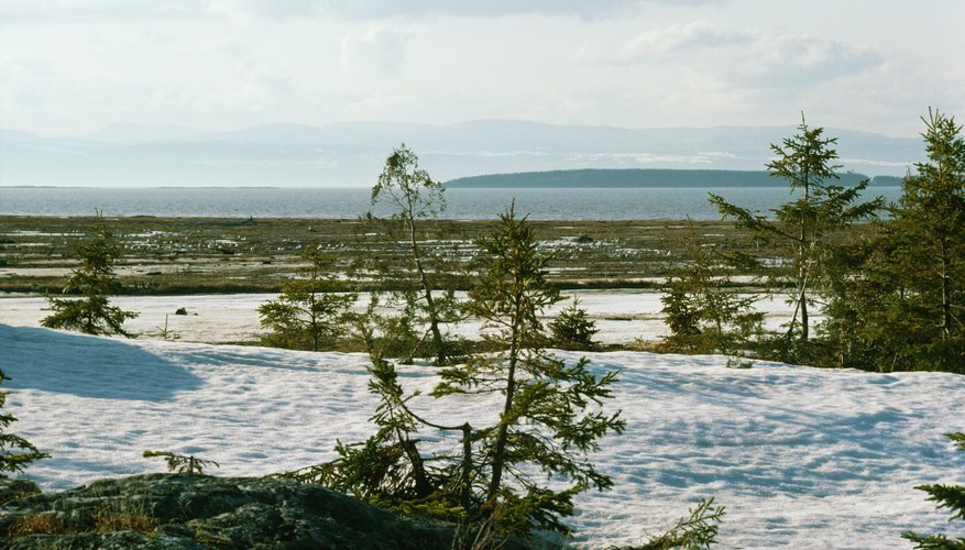 Tundra with snow and stunted trees in Canada