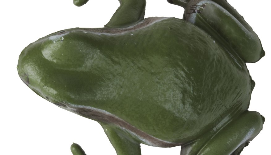 Las diferencias reconocibles entre las ranas machos y hembras dependen de la especie.