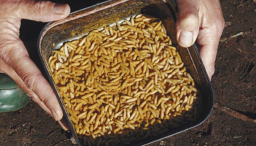 Puedes haber encontrado larvas o marcas negras en pasta o cereales en tu cocina.