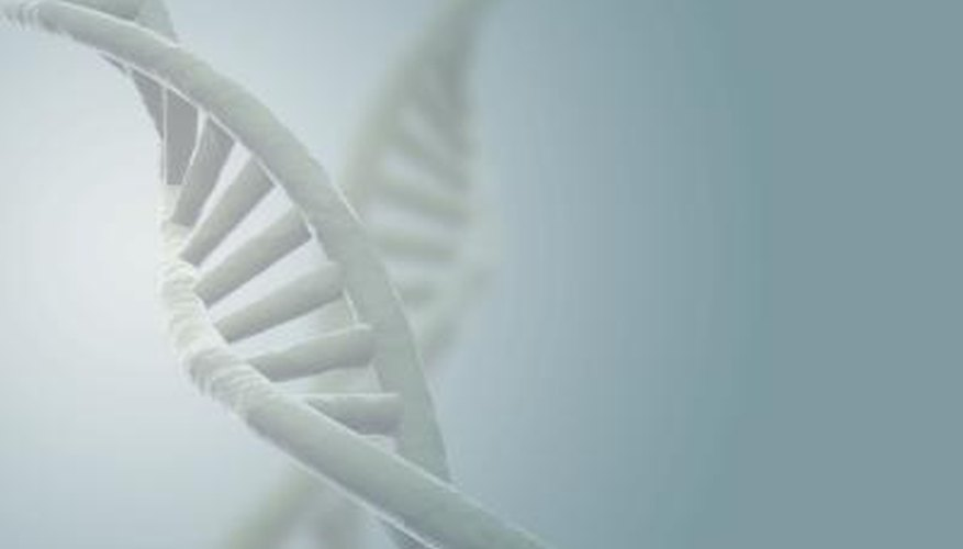 Genes are segments of DNA that determine which proteins a cell will manufacture.