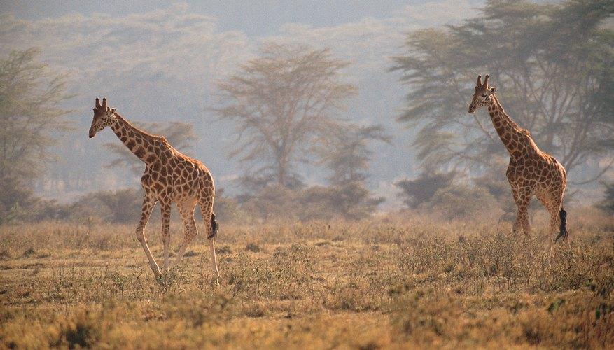 Kenya es una gran opción para las personas a las que les gustan las actividades al aire libre.